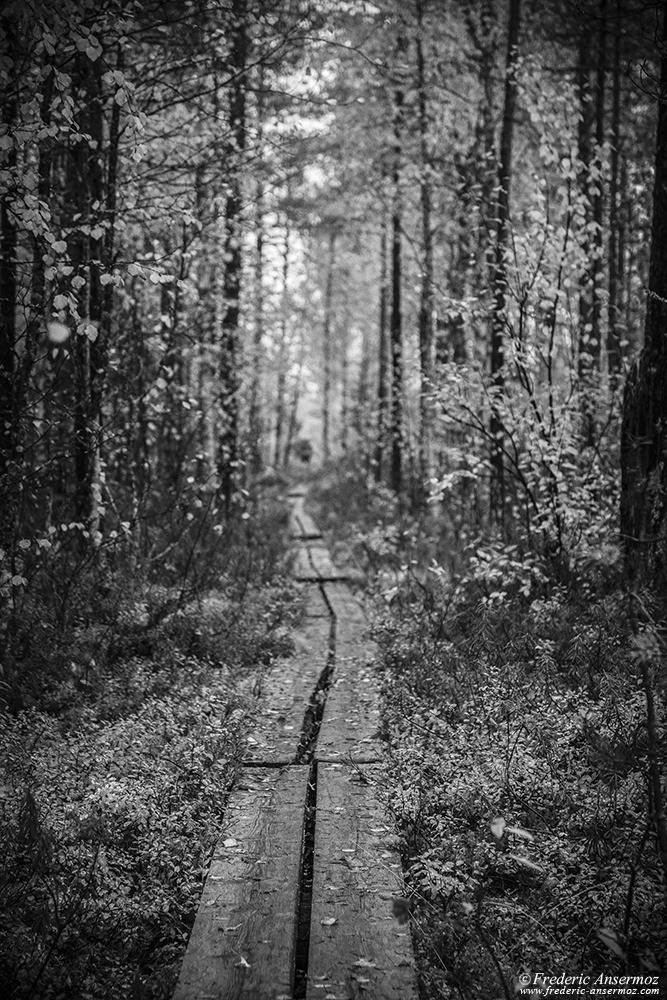 Finnish boardwalk, peatlands / bogs and forests in Oulanka National Park
