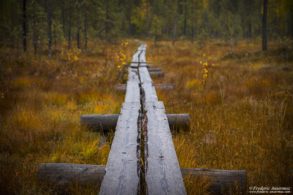Boardwalk across peatlands in Finland