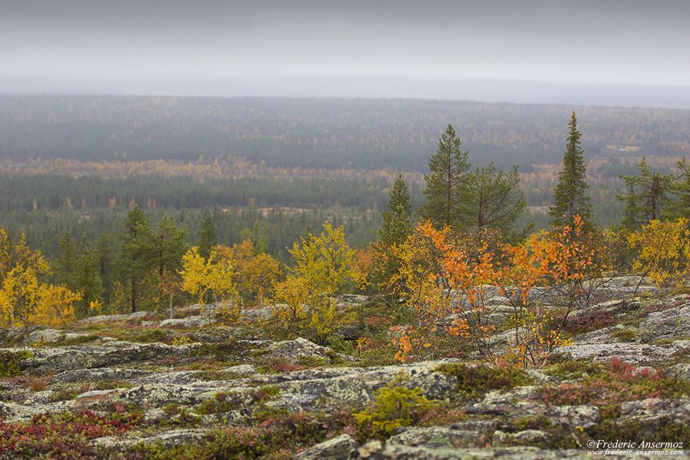 Paysage Laponie finlandaise, Parc national Urho Kekkonen