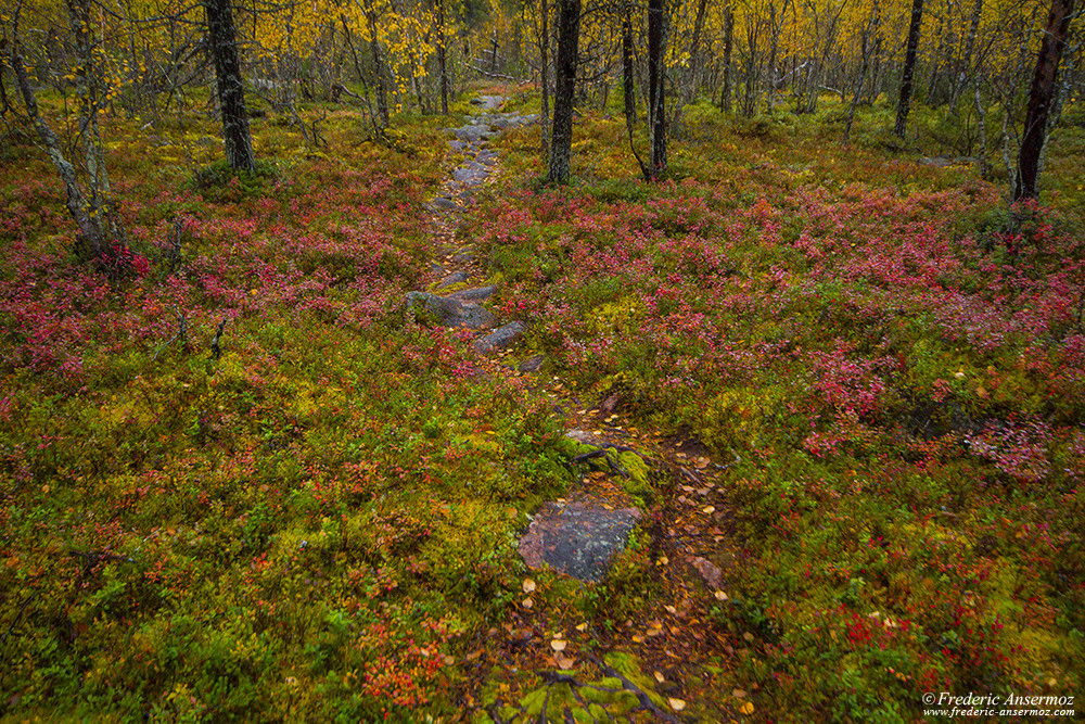 Finnish forest in Lapland