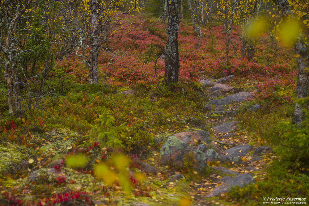 Hiking trail in Finland, Sompio Strict Nature Reserve