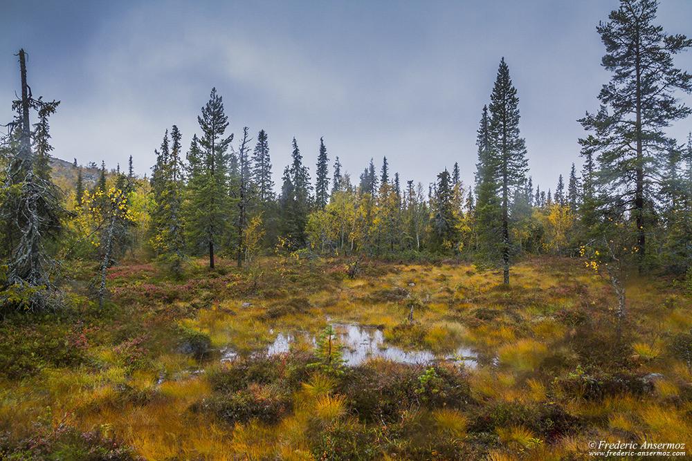 Paysage finlandais en Laponie, tourbière