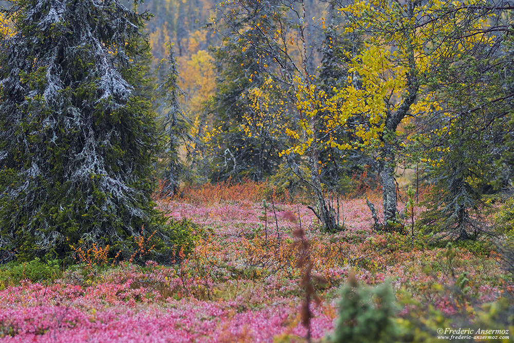 Autumn colors in Finland