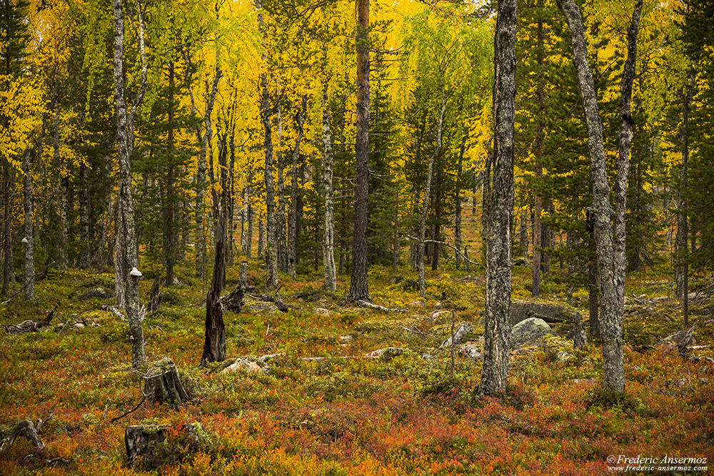 Colorful forest during Autumn in Finland