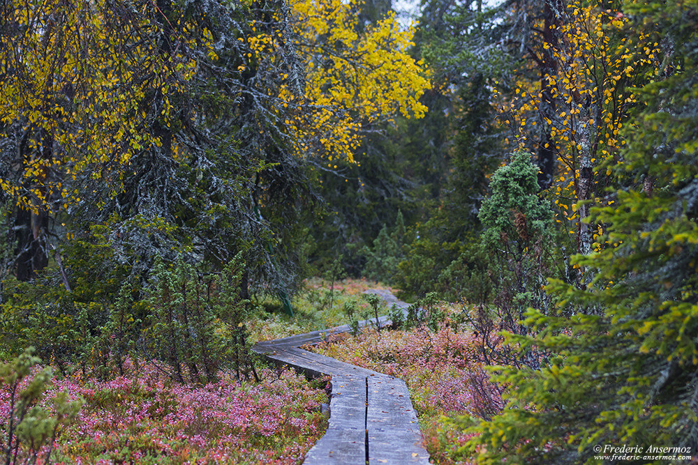 Typical wooden path in Lapland, Finland