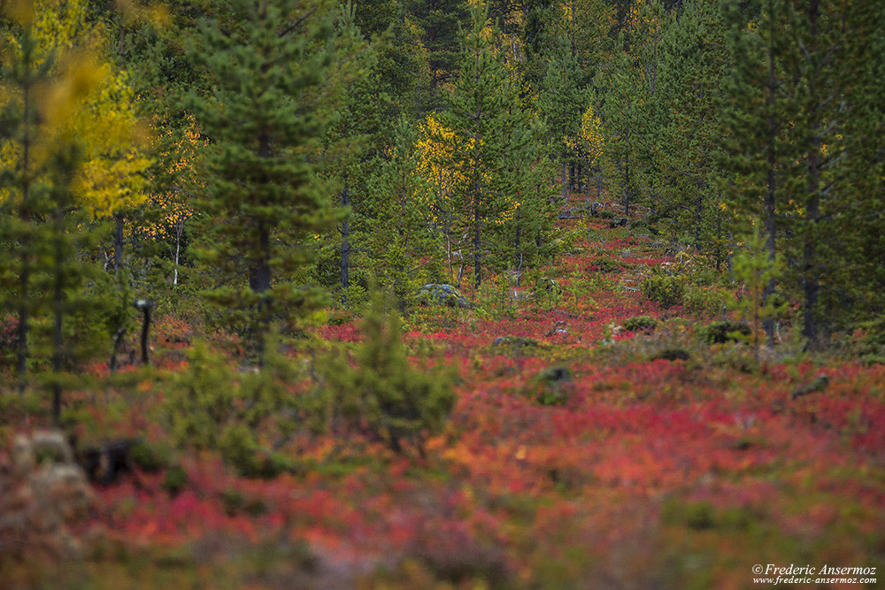 Colorful and beautiful nature in Finland