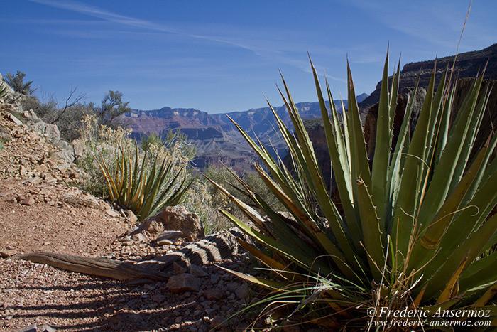 Grand canyon 0644