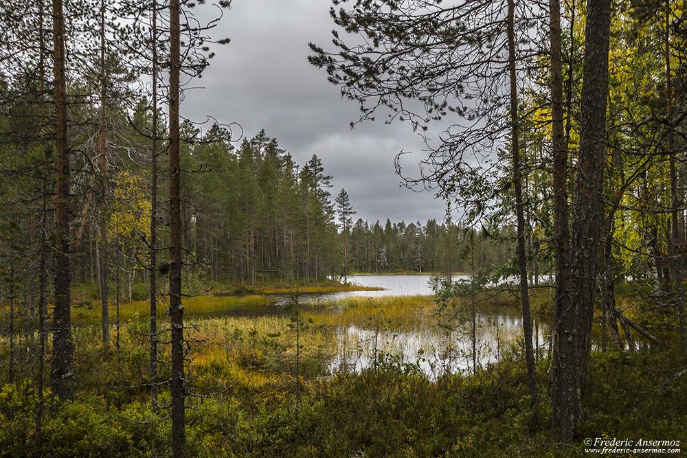 Lake border in Hossa National Park, Finland