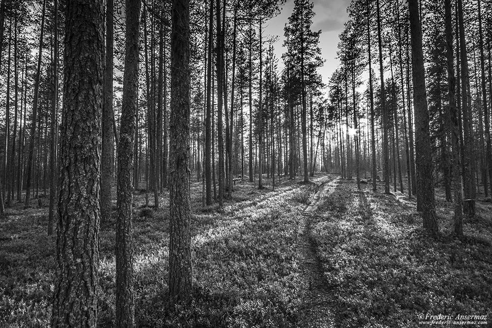 Pine forest on Kokalmuksen Kierros, Hossa Park