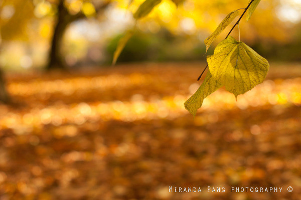 Miranda pan photography autumn