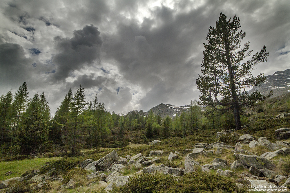 Landscape photography in Italy, at the Mont Avic Park, Aosta