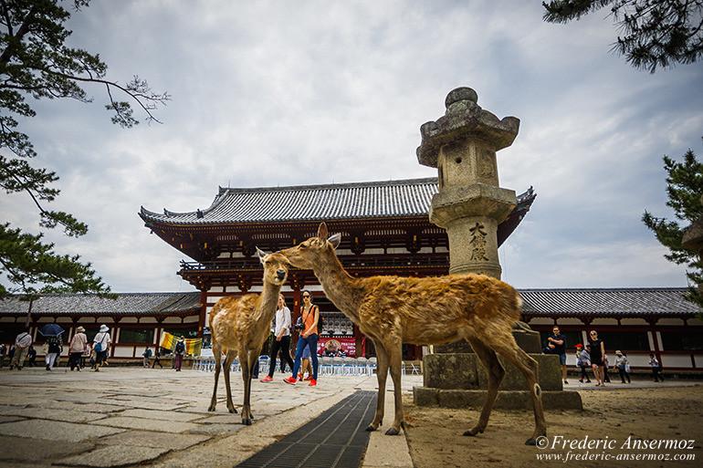 Nara todaiji temple 05