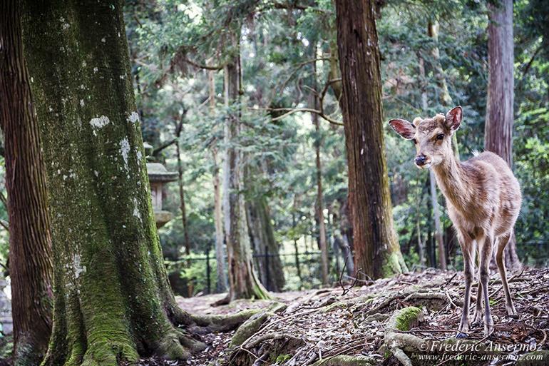 Nara todaiji temple 25