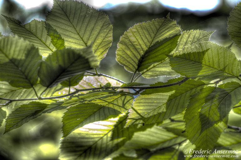 Foliage hdr