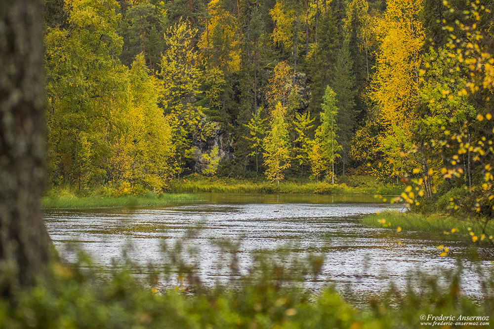 River Kitkajoki during Fall Season in Finland, Oulanka Park