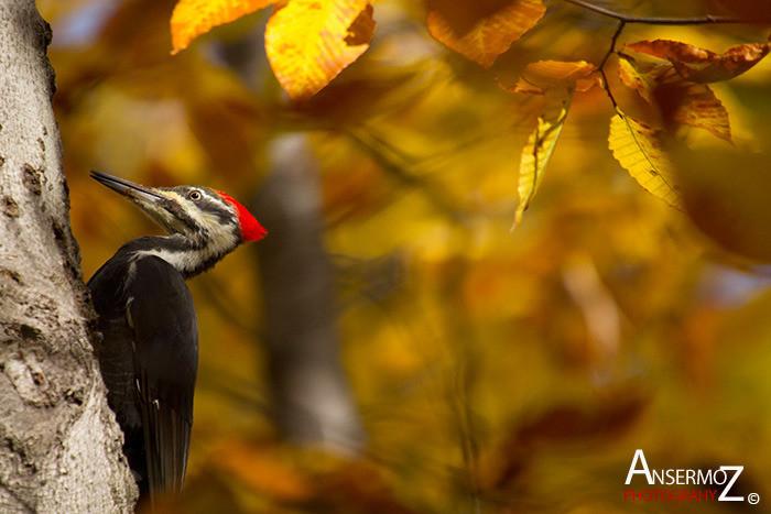 Ansermoz Photography Bird